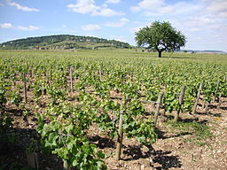 Beaune (Côte d'Or, Fr) Vignobles
