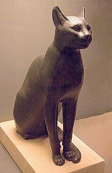 Big The Cat Asmr
