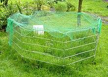 meerschweinchen freiland wikibooks sammlung freier lehr sach und fachb cher. Black Bedroom Furniture Sets. Home Design Ideas