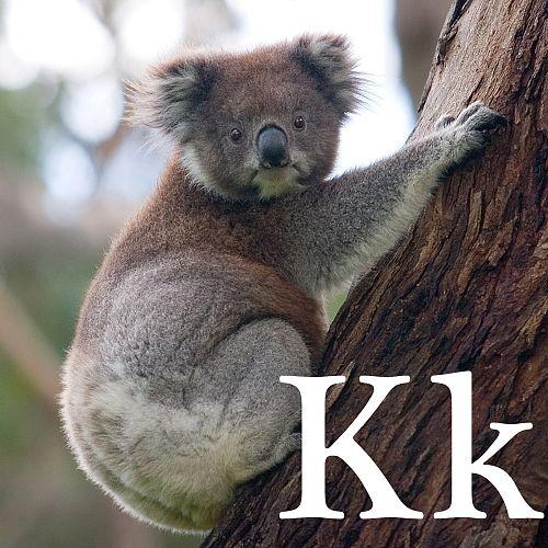 Wikijunioralfabetul Animalelortoate Paginile Wikimanuale