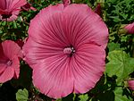 Large-beautiful-flower.jpg