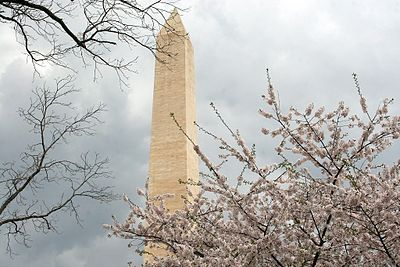 Photo Essay Cherry Blossoms Bloom In Dc  Wikinews The Free News  Cherry Blossoms Around The Washington Monument In Washington Dc English Essay Topics For College Students also Custom Writing U S  Mental Health Essays