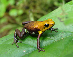 A picture of the new species, taken during the expedition
