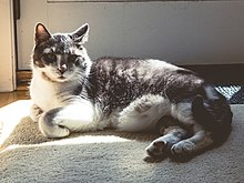 Dr Shutt's cat lounging in the sunlight