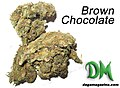 Brown Chocolate Cannabis Strain from South Africa.jpeg