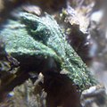 Cannabis as seen under DIY macroscope.jpeg