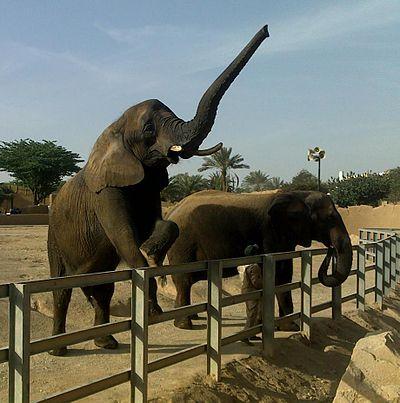 الفيل 400px-فيل_إفر�