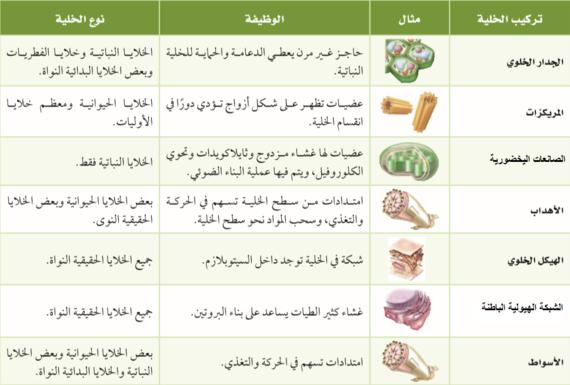 مقارنة بين الخلية النباتية والخلية الحيوانية