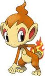 Chimchar.jpg