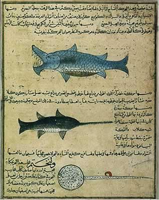 Arabic-Manuscript-zoology.jpg (317 × 400 pixels, file size: 28 KB,
