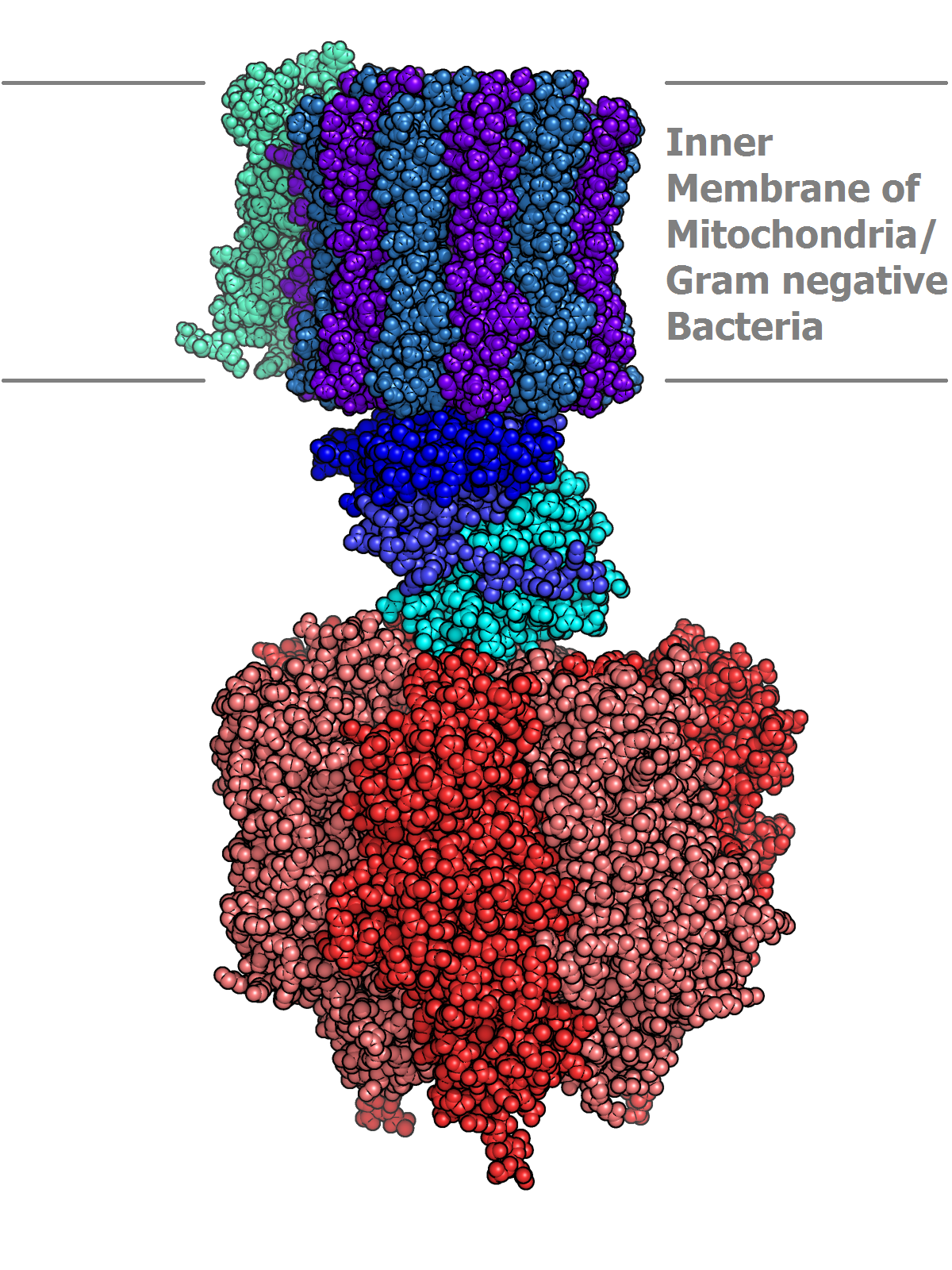 Atp Synthase Wikipedia