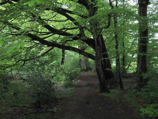 Beech Grove - geograph.org.uk - 1310801