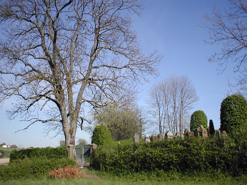 Berwangen-judenfriedhof.jpg