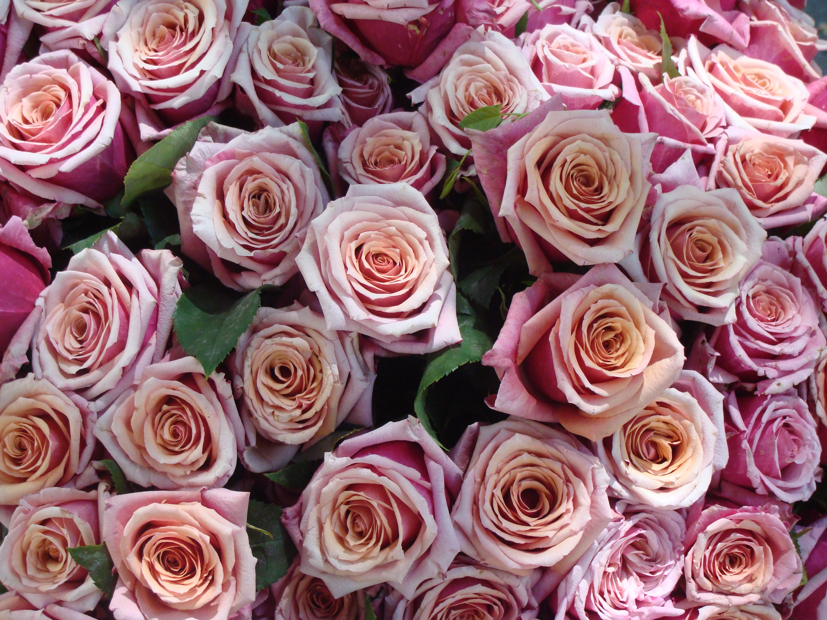 File bouquet de roses wikimedia commons - Bouquet de rose artificielle ...