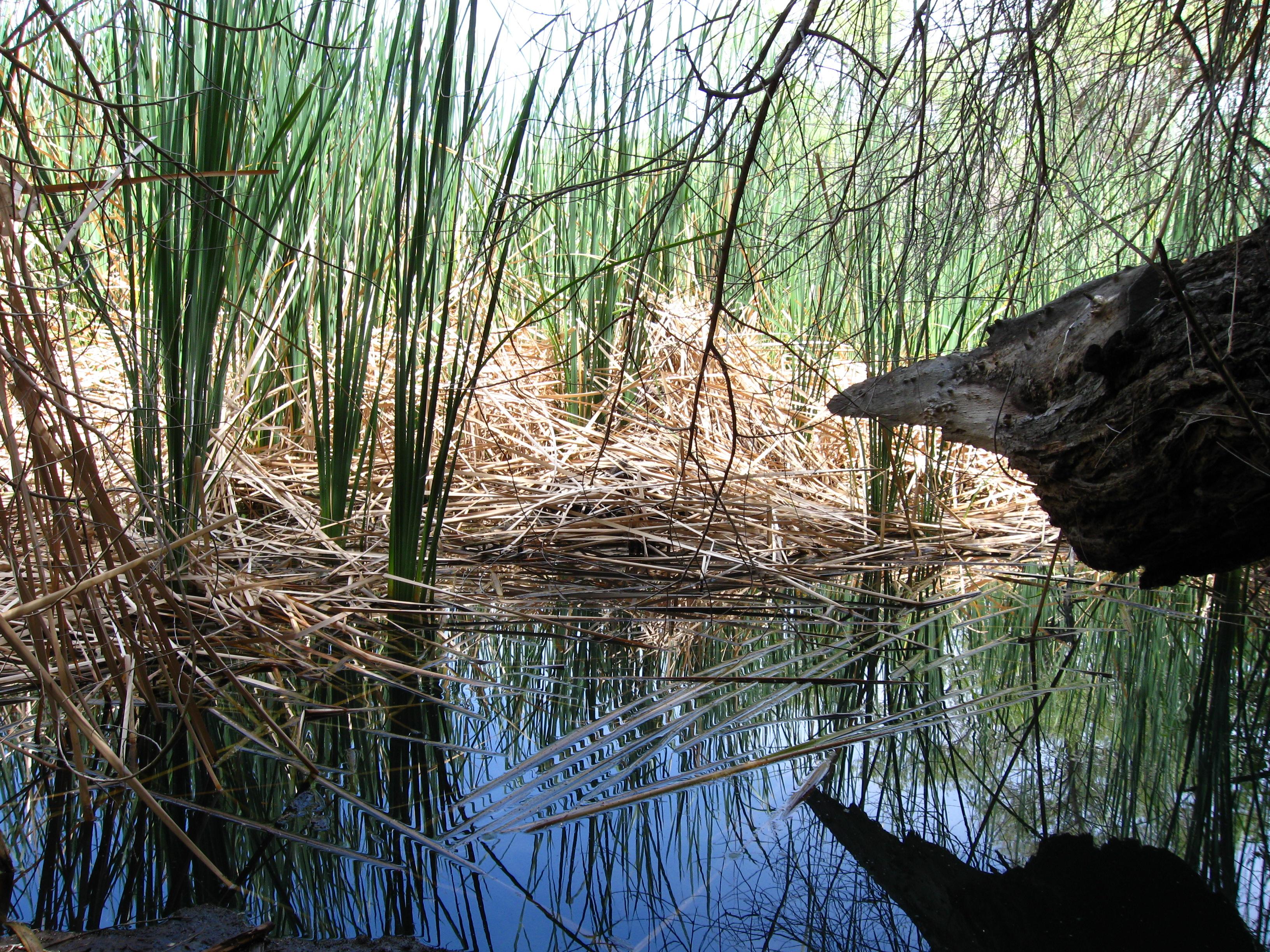 Corn Creek Campsite - Wikipedia