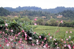 Sonoma County's Dry Creek Valley