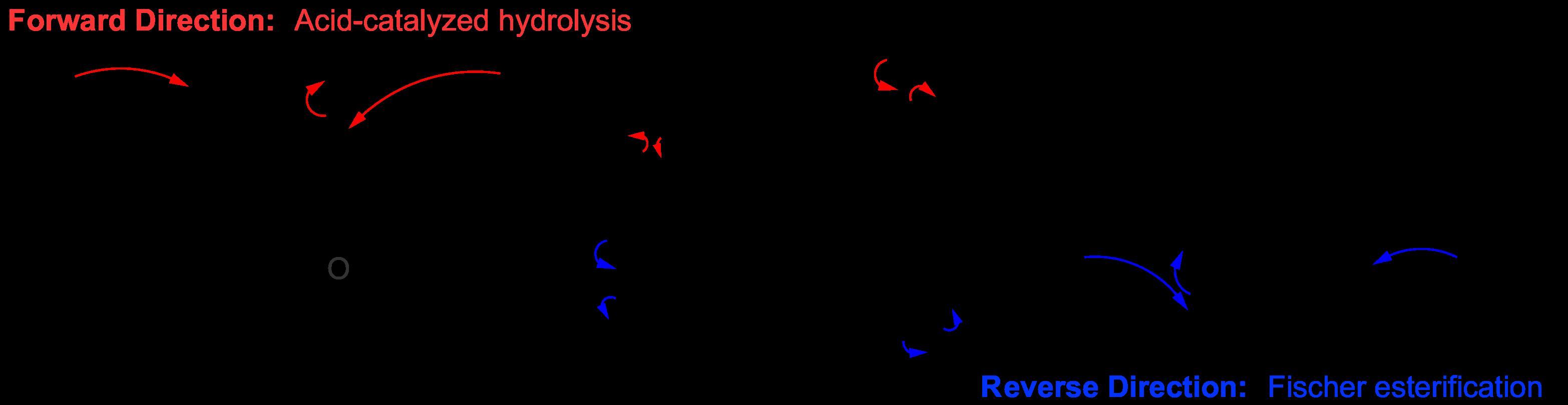 File:Fischer Esterification-Hydrolysis Equilibrium.png