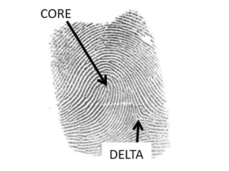 File Forensic Finger Print 1 7550742590 Cropped Png Wikimedia Commons