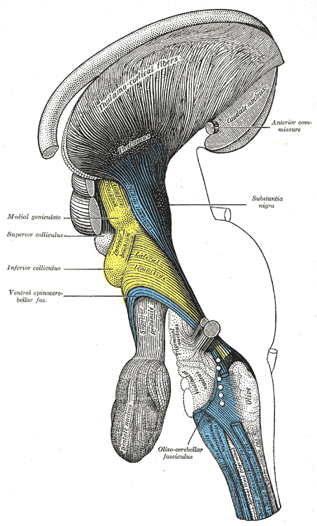 Tectum - Wikipedia