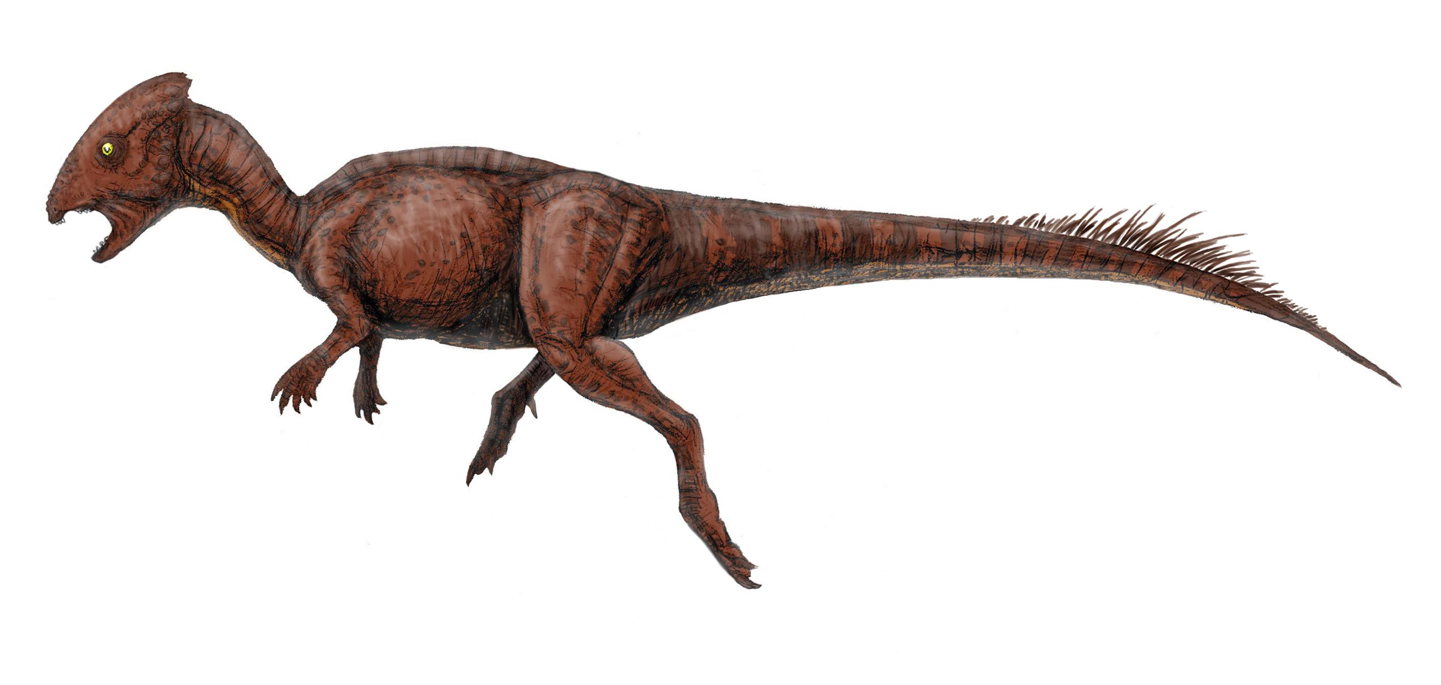 頭突き 恐竜