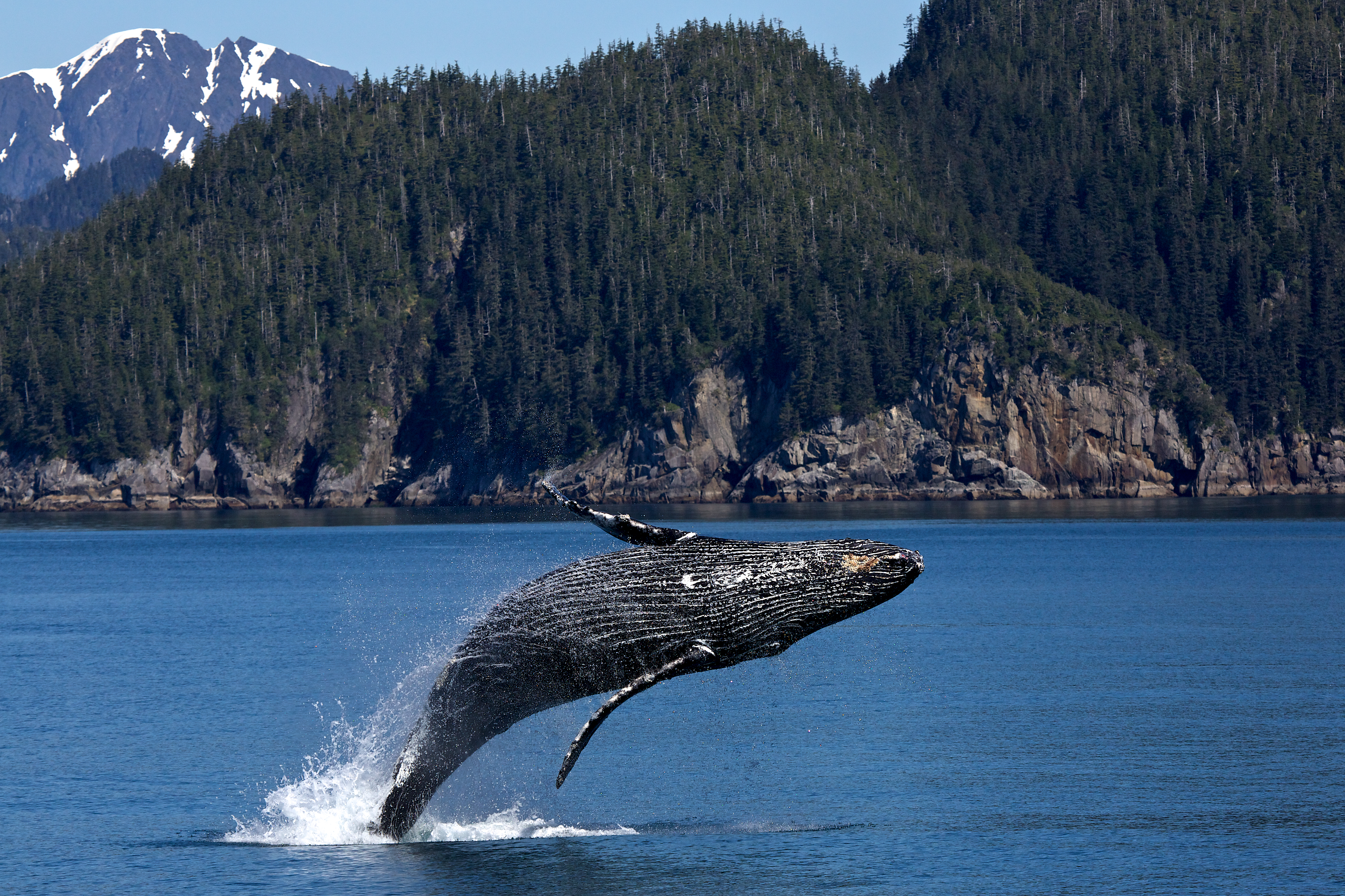 One Cool Thing: And the Emmy Goes to…Secrets of the Whales!