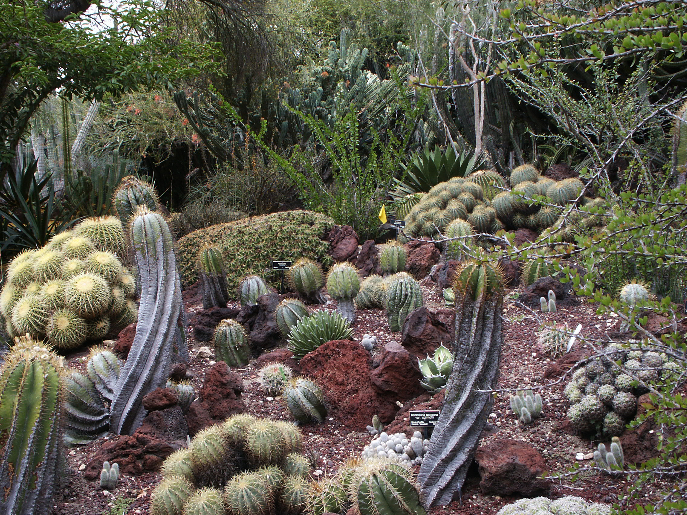 File:Huntington Desert Garden, May 2009