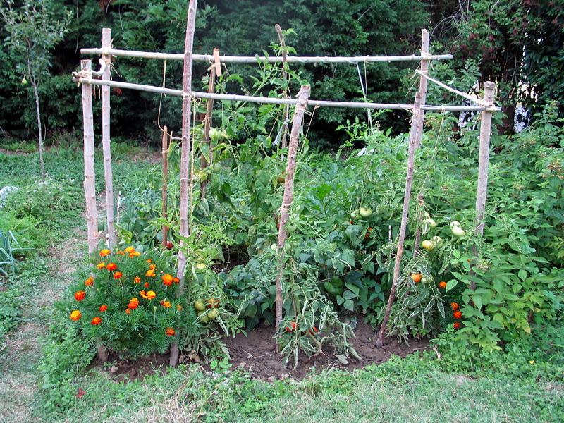 file jardin potager