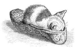 Kitten in Slipper.jpg