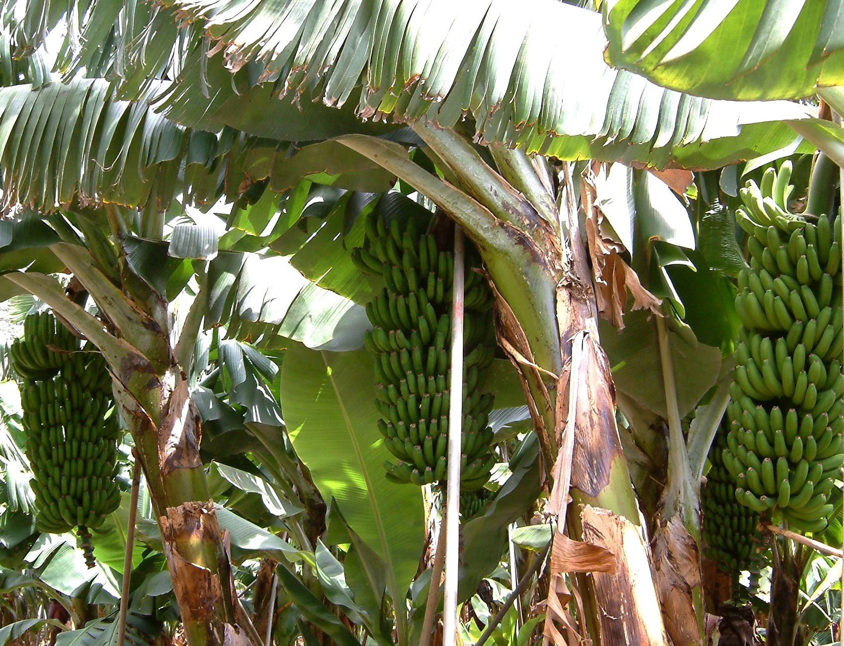 Liste Von Nutzpflanzen