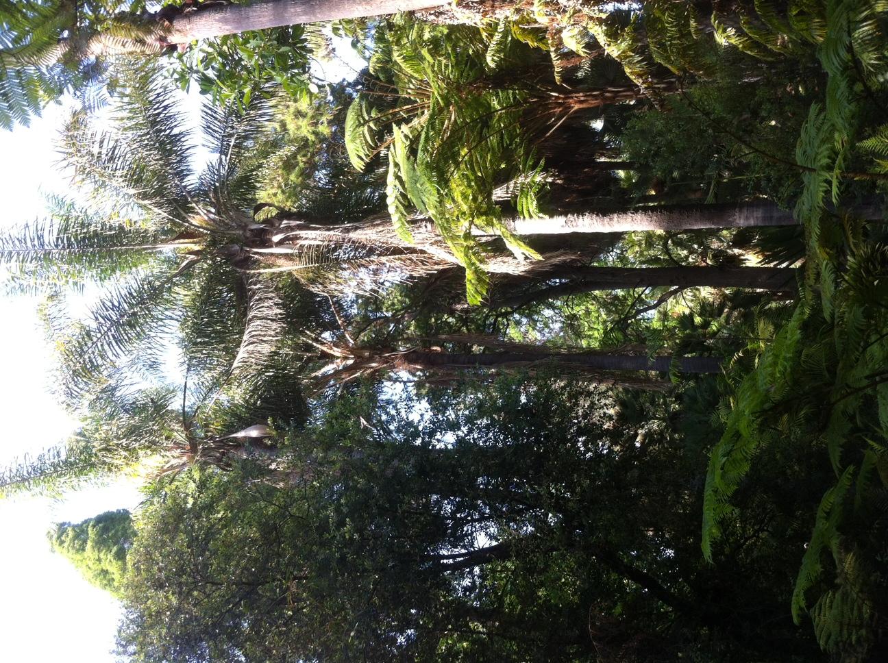 Etonnant File:Mildred E. Matthias Botanical Gardens 05.JPG