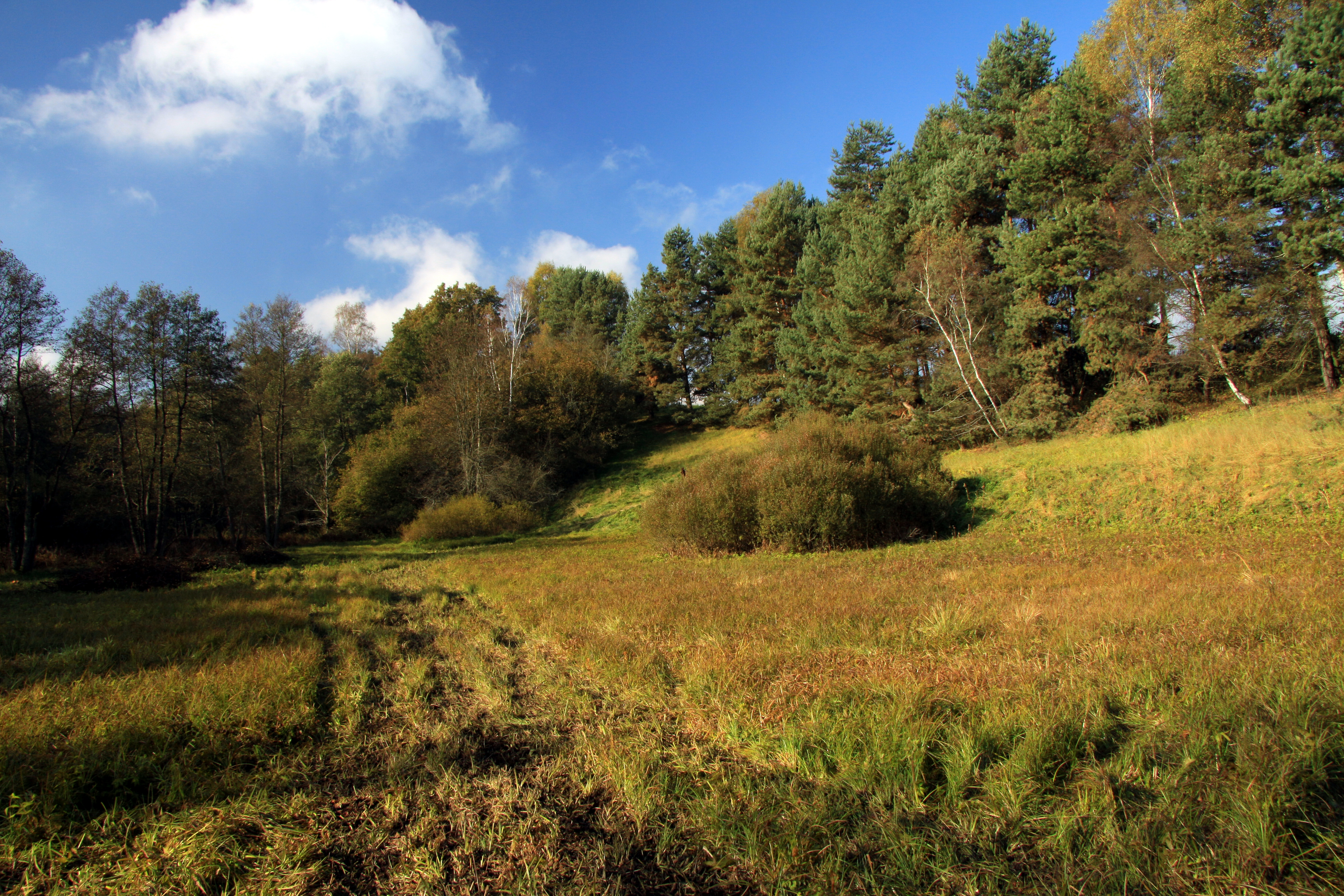Nature reserve Dobrockovske hadce in autumn 2011 (35).JPG