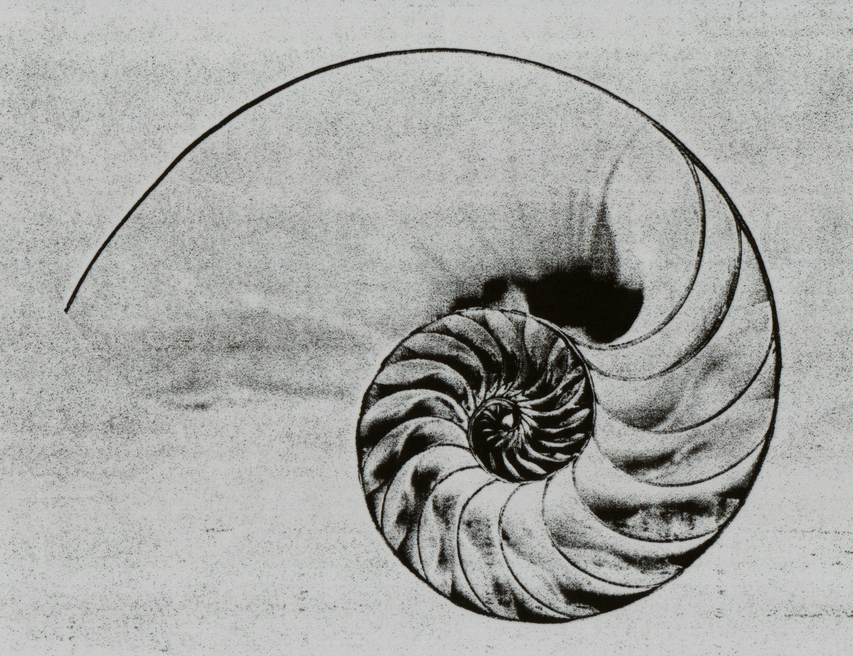 Description Nau... Naturalistic Design Drawing