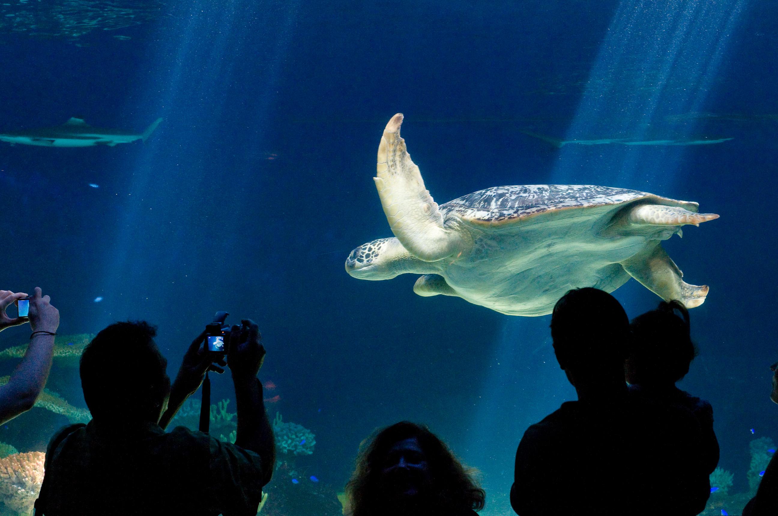 Image Result For Vancouver Aquarium