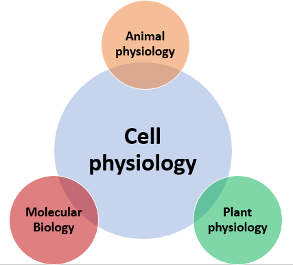 Cell physiology - Wikiwand