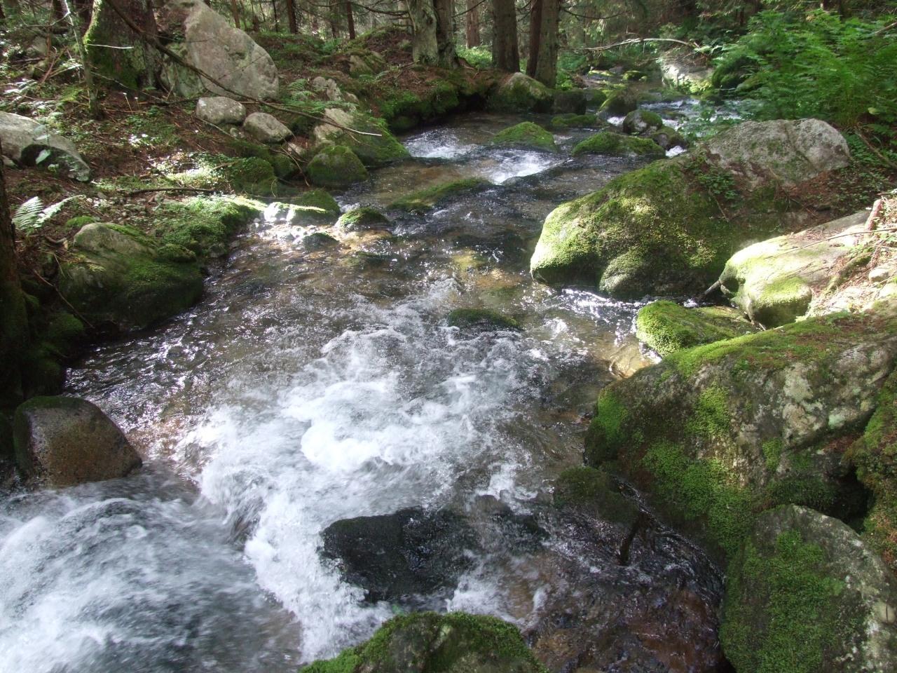 Tečúca voda - horný tok (potok Bystrá vo Vyských Tatrách)