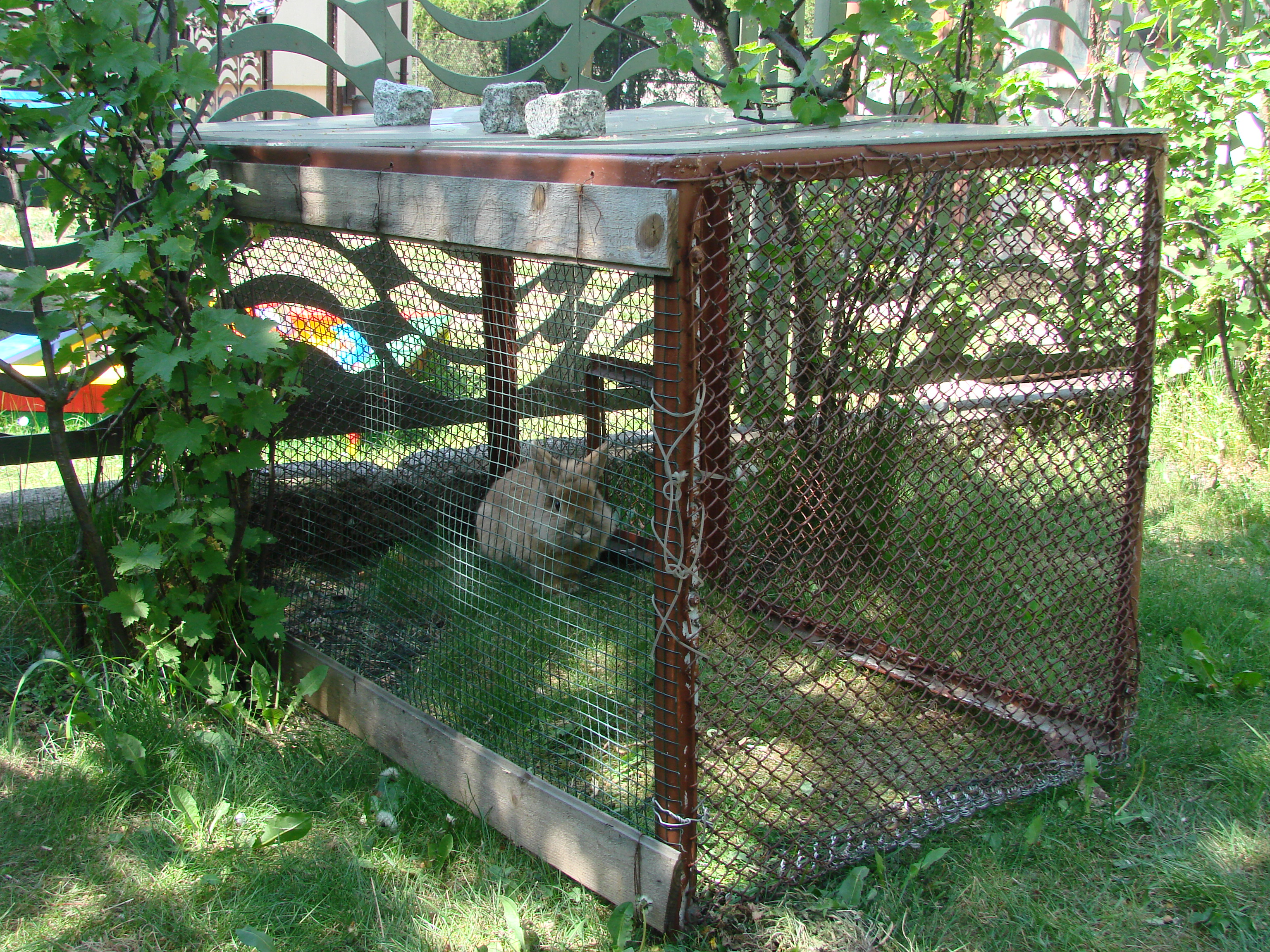 File rabbit cage jpg wikimedia commons for Amazing rabbit cages