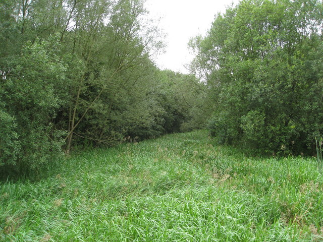 Reedbeds at the end of Codnor Park Reservoir - geograph.org.uk - 1463288