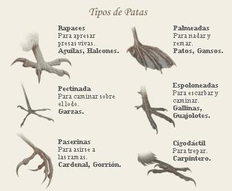 Descripción Tipos de Patas.jpg