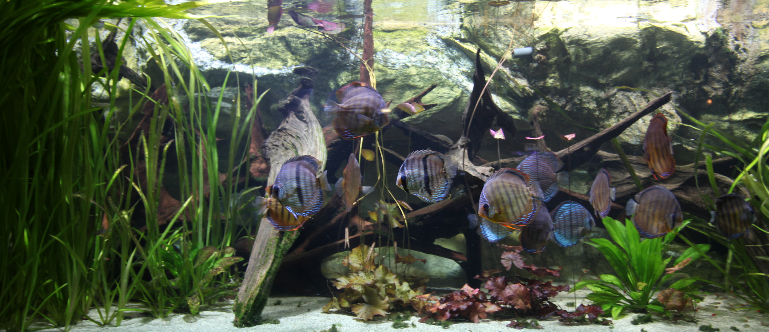 File:Tropical aquarium Palais de la Porte Doree.jpg - Wikimedia ...