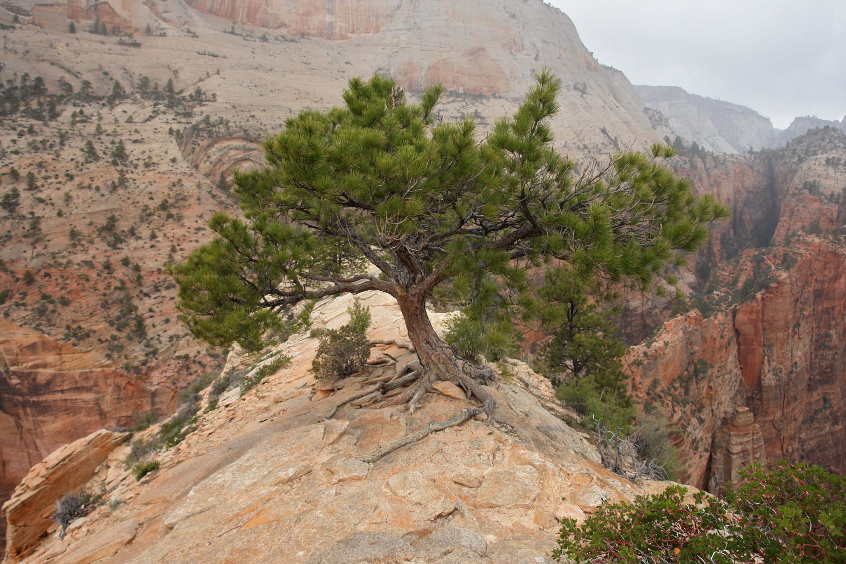 Description up on angels landing zion national park 3443206821 jpg