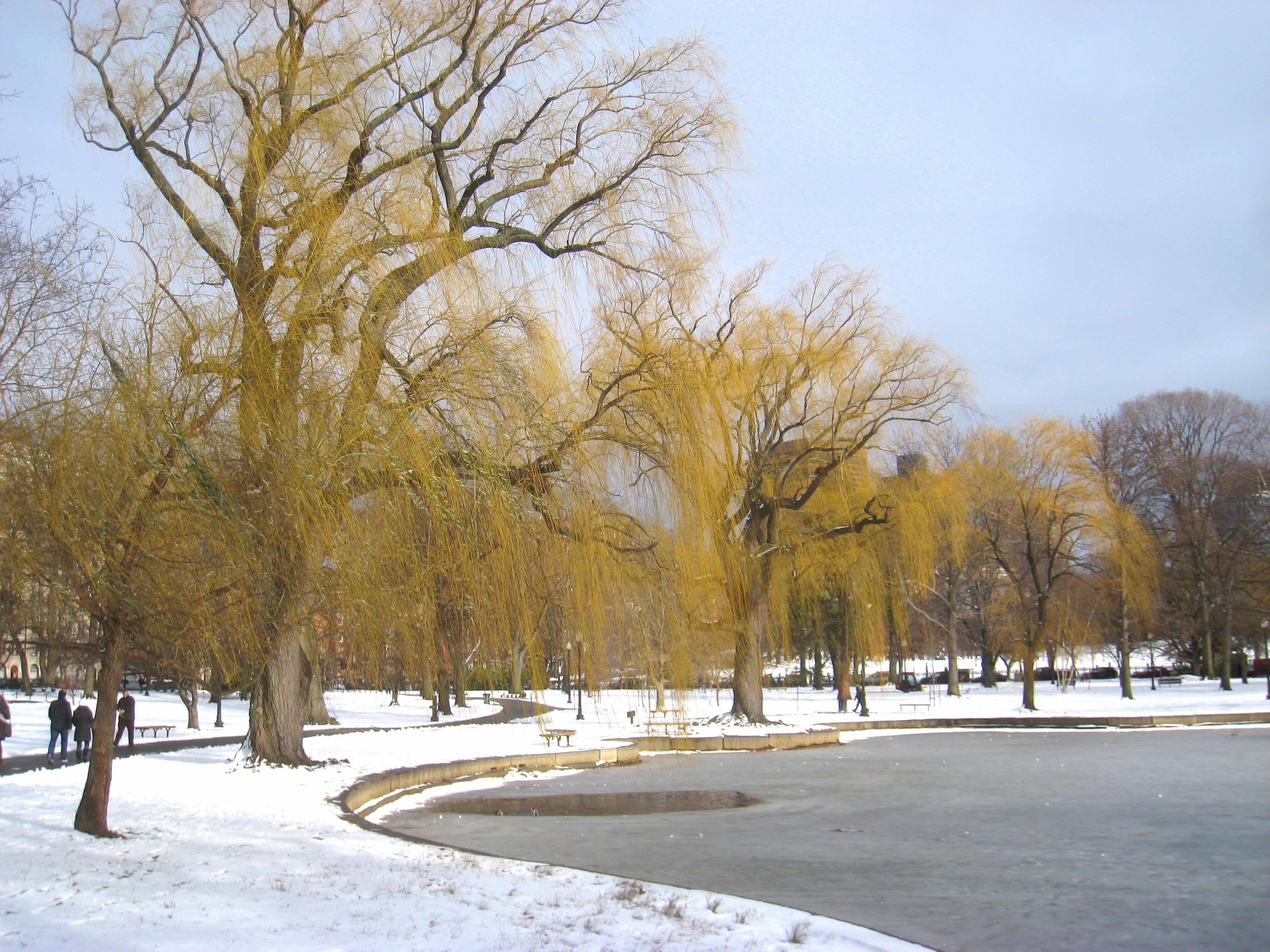 file winter in boston public garden img 8332 jpg wikimedia commons