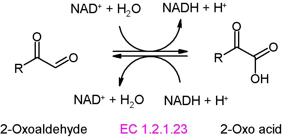 File:2-oxoaldehyde dehydrogena...