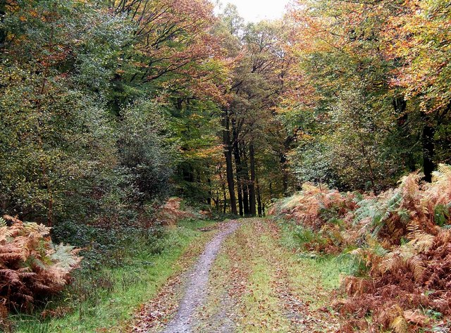 Autumnal scene in the Wyre Forest - geograph.org.uk - 1557169