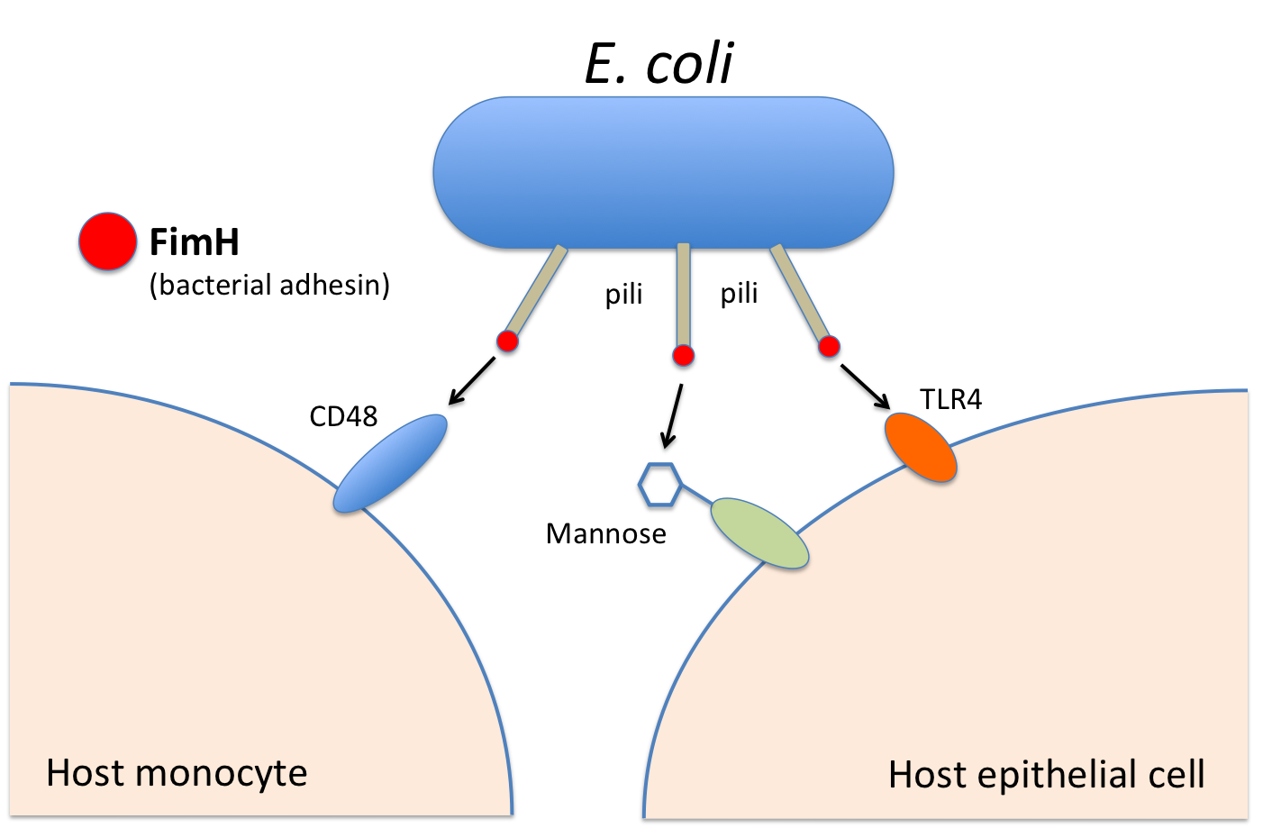 tissue tropism The tissue tropism and pathogenesis of viruses are determined by a combination of several factors this review article provides a summary of host and virus factors affecting cell and tissue tropism and.