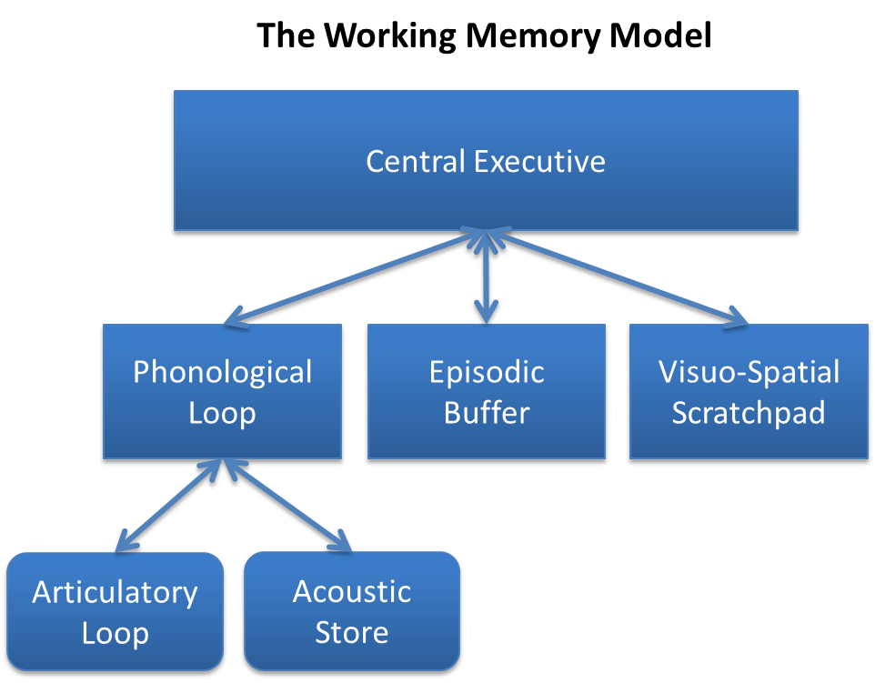 psychology multi store model memory essay
