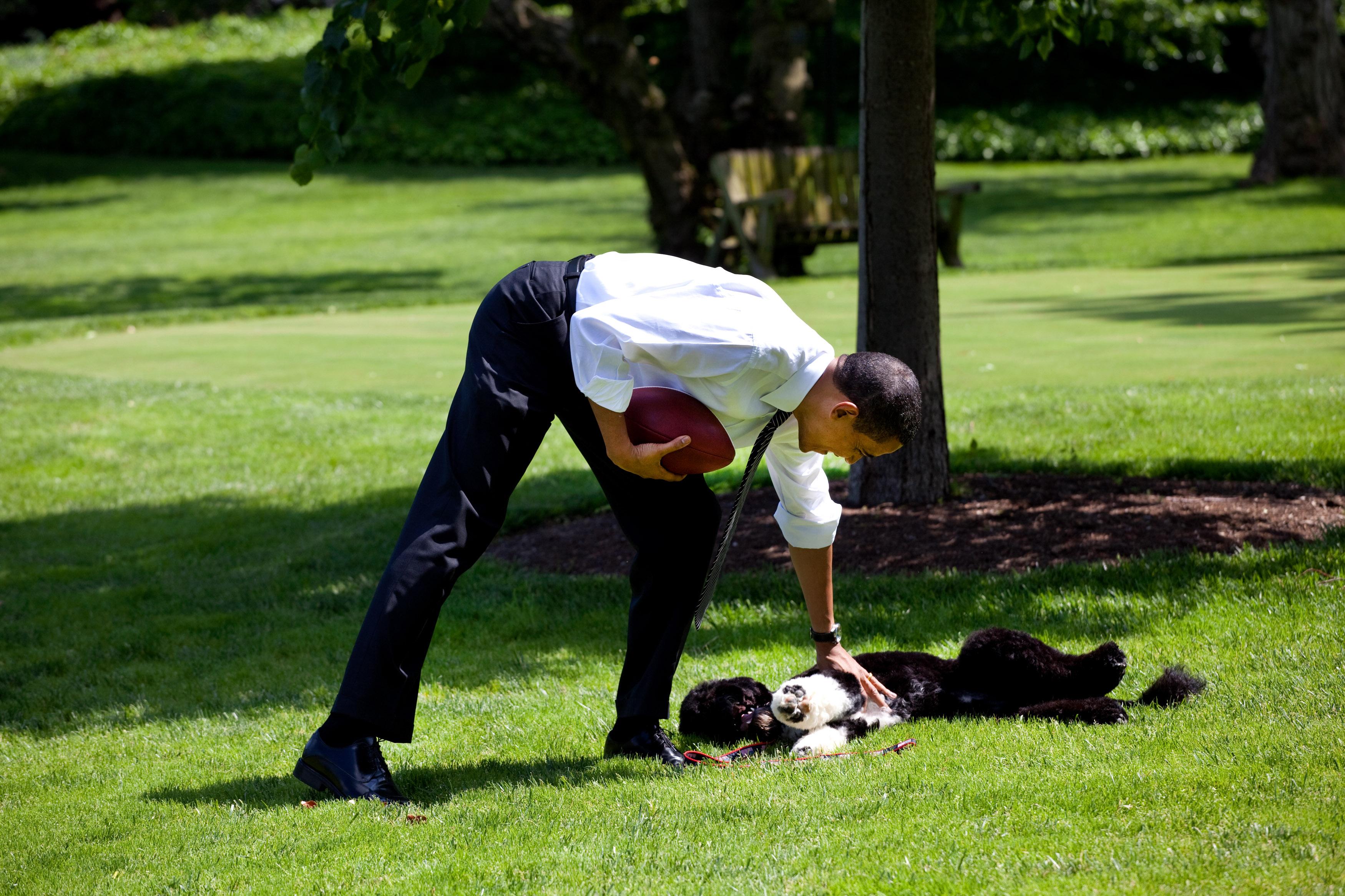 Barack Obama Dog Breed