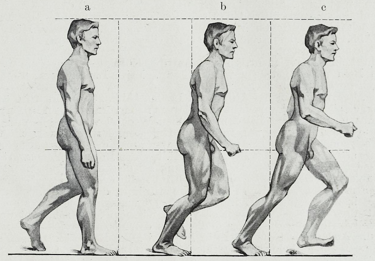 Terms of movement in anatomy