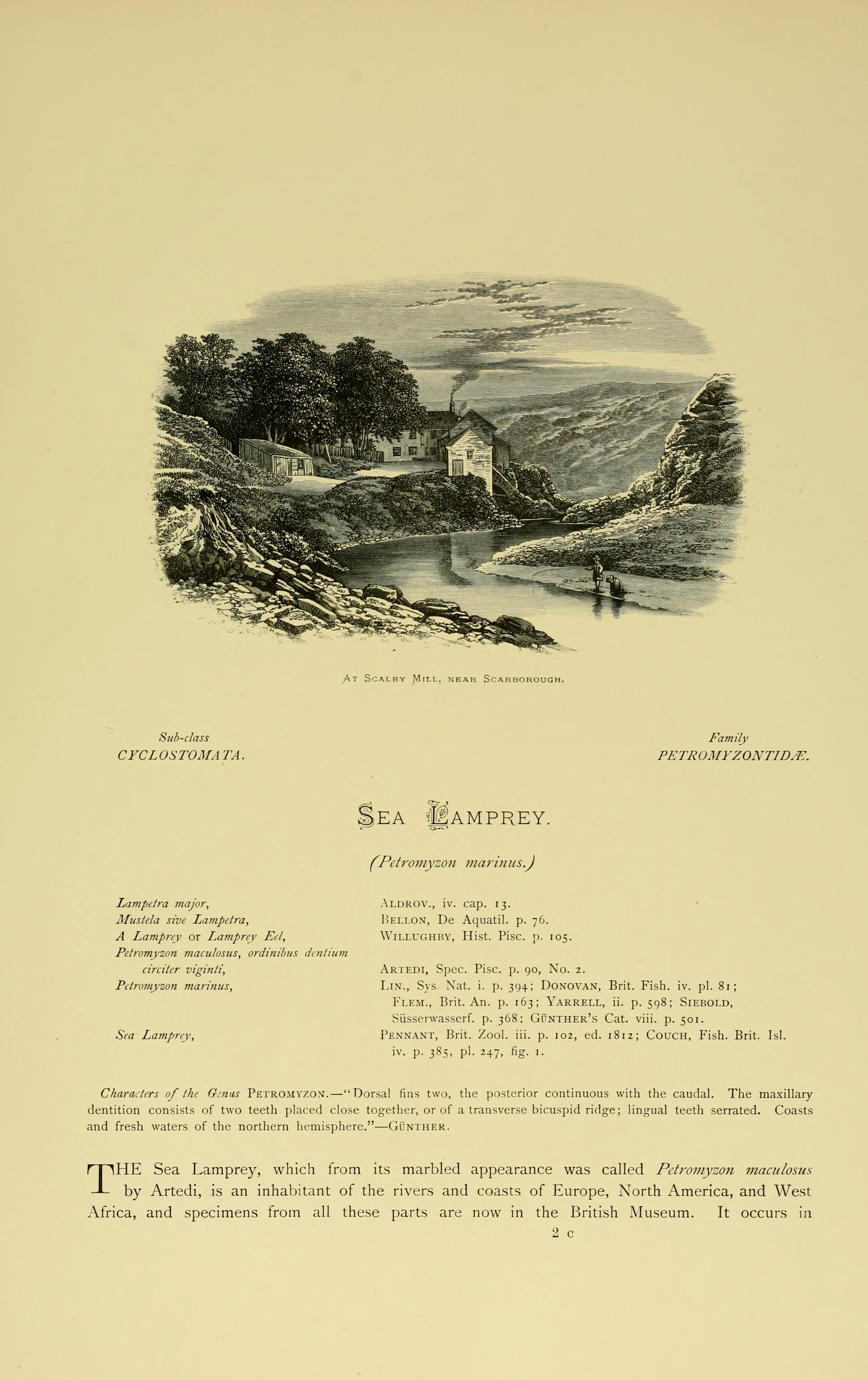 File:British fresh water fishes (Page (193), Fig  in text