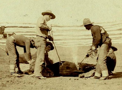 Cattle branding (Grabill 1888, cropped)