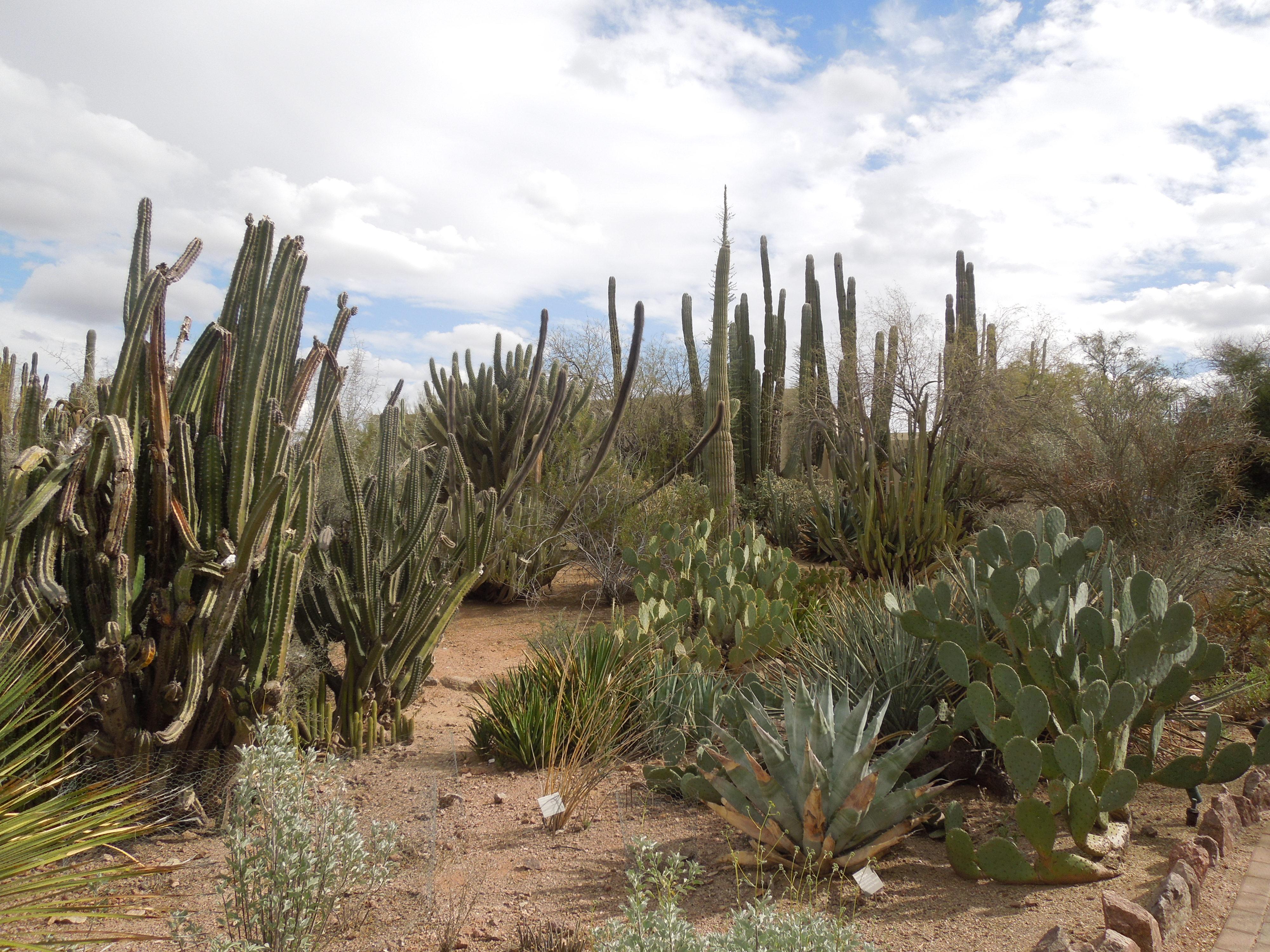 File Desert Botanical Garden Phoenix Arizona 16 Jpg